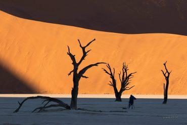 Martwy las w Namibii o wschodzie słońca, fotowyprawa