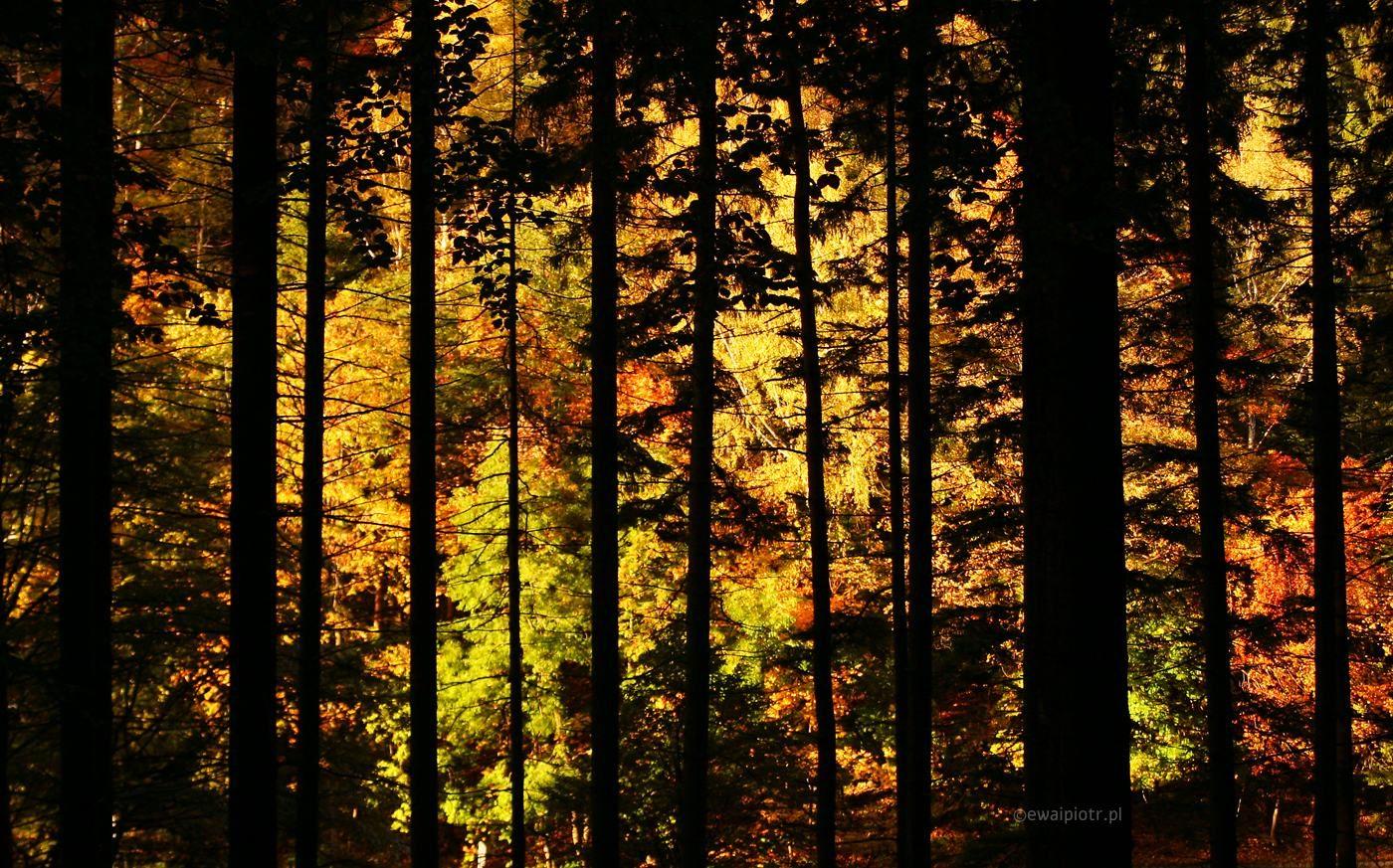 Złota jesień warsztaty fotograficzne
