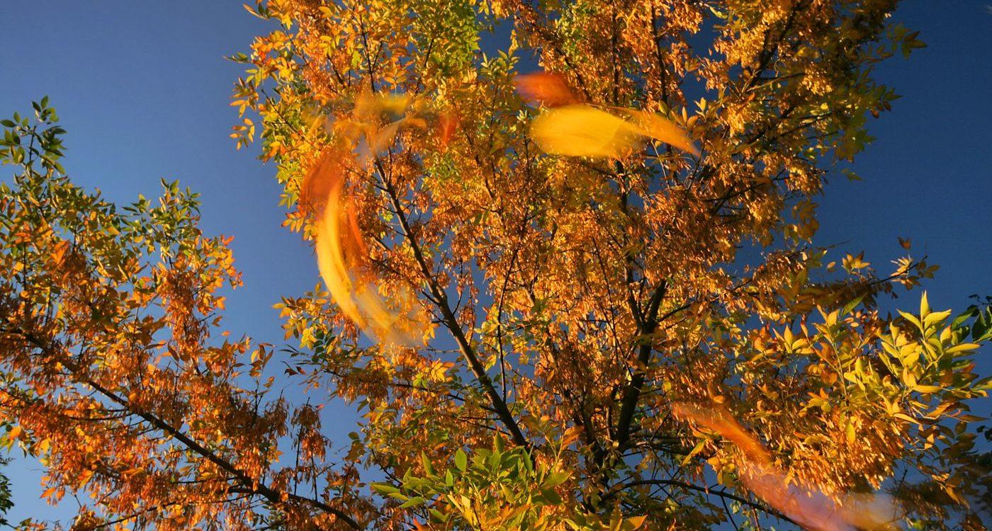 Złoty czas jesieni, warsztaty fotograficzne