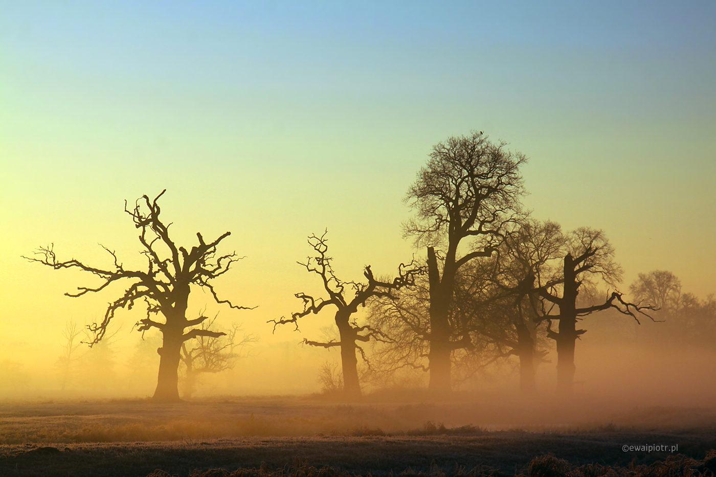 Dęby Rogalińskie, warsztaty fotografii krajobrazowej