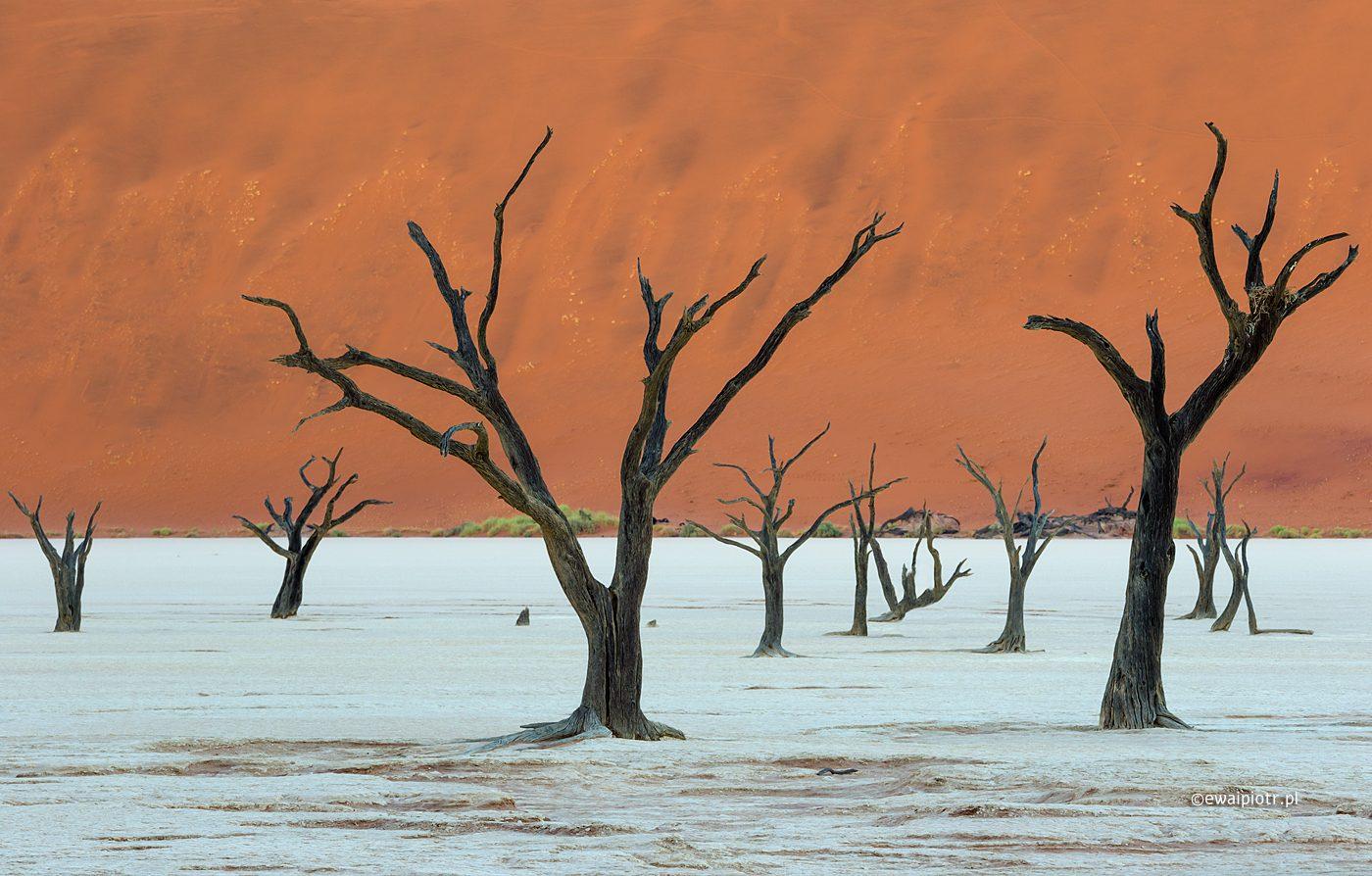 Martwe drzewa Deadvlei przed świtem, fotowyprawa Namibia