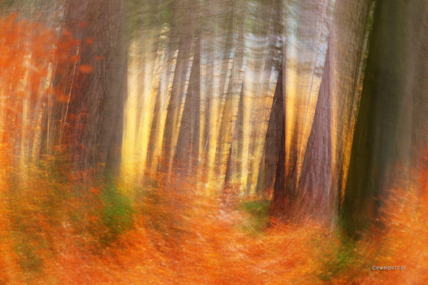 Intencjonalne poruszenie - warsztaty fotograficzne, złota jesień, Karkonosze