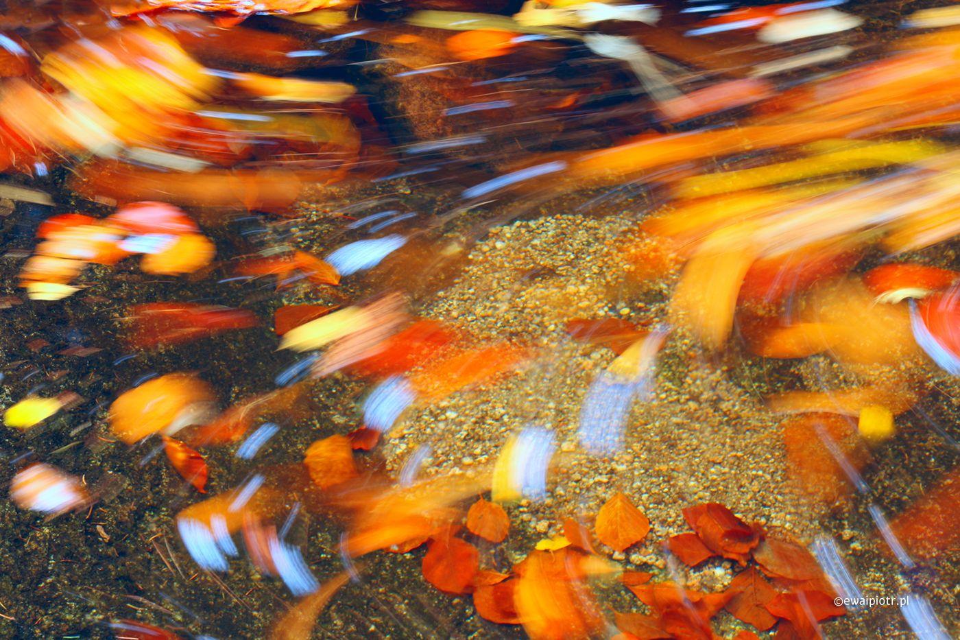 Złote liście w wodzie, długa ekspozycja, warsztaty fotograficzne