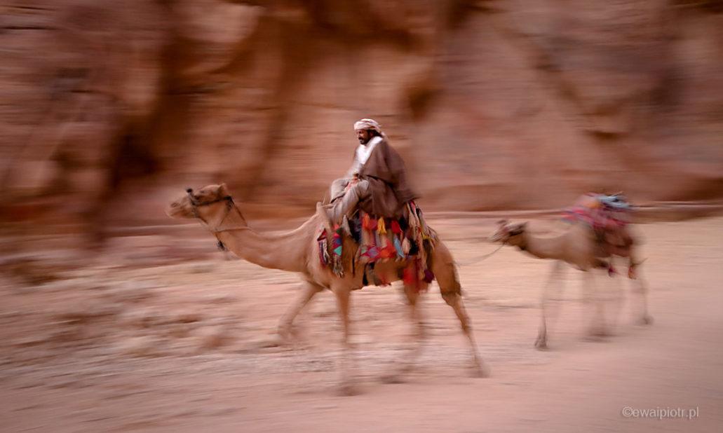 Wielbłąd wśród skał Petry, wyprawa foto, Jordania, panoramowanie