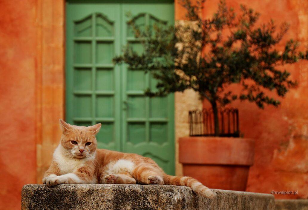 Kot z Roussillon, Prowansja, warsztaty fotograficzne