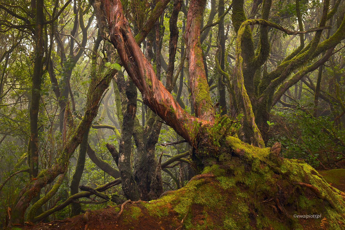Fotografowanie lasu deszczowego, Wyspy Kanaryjskie