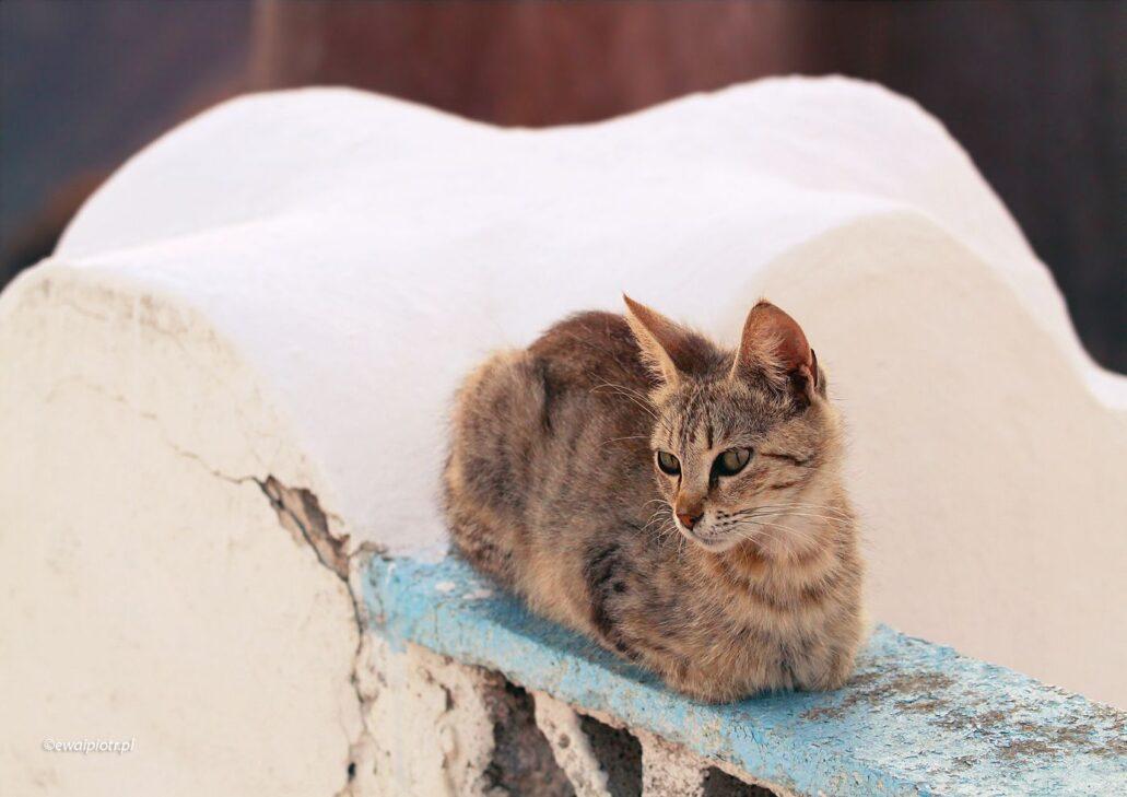 Kot z Santorini, warsztaty fotograficzne