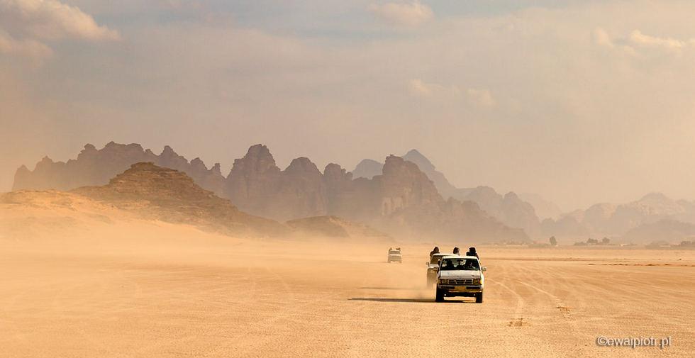 Jordania wiosna fotowyprawa, kwiaty na pustyni