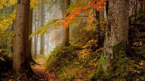 Jak fotografować w lesie