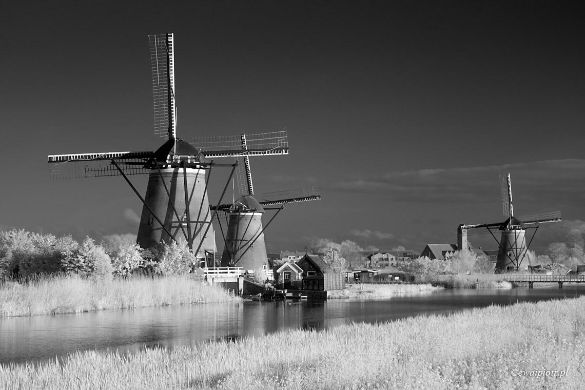Świat w podczerwieni, Holandia
