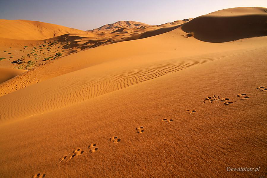 Ślady na piasku, fotografowanie pustyni, Maroko