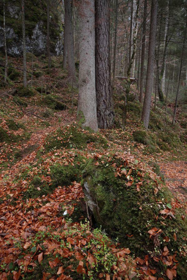 wieczorny las bez światła