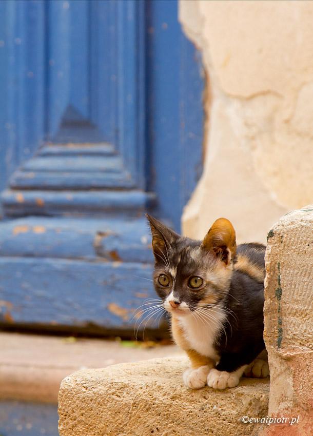 Kot i błękitne drzwi, Chania, Kreta