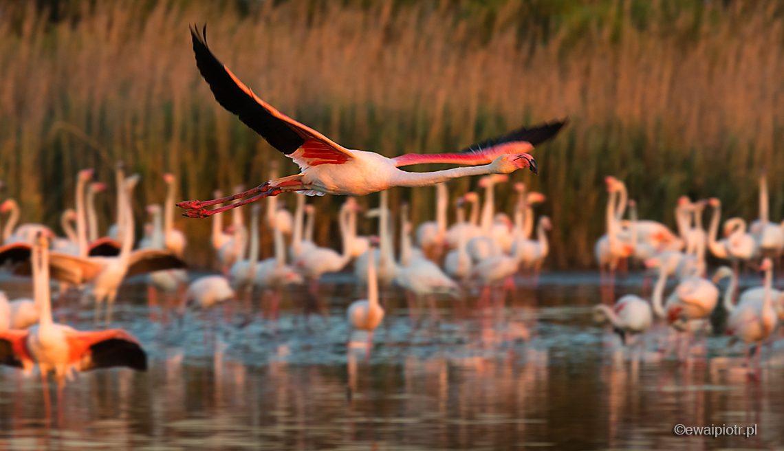 dynamiczne zdjęcie flamingów