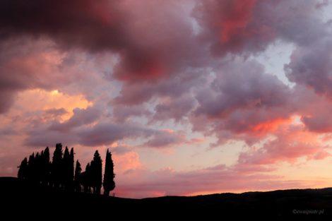 Cyprysy o zachodzie, Toskania, prosta kompozycja