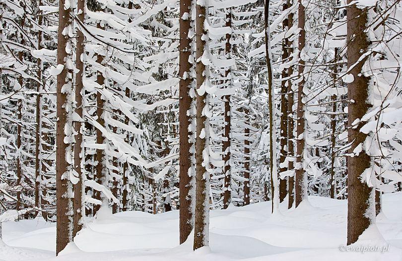 Zimowy las, jak bezpiecznie fotografować w zimie