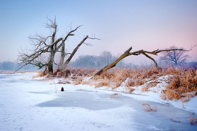 Rogalin, zimowy pejzaż, jak fotografować gdy jest mróz