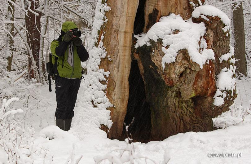 Zimowe ubranie dla fotografa, Białowieża