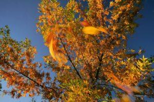 Złoty Czas Jesieni - warsztaty fotograficzne