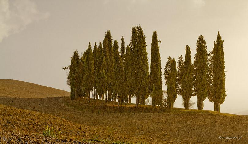 Cyprysy w deszczu, Toskania, ulewa
