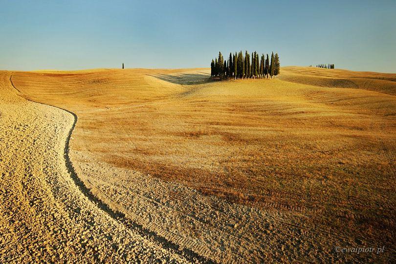 Toskania jesienią - brązowe pole i cyprysy, obiektyw do fotografowania w Toskanii