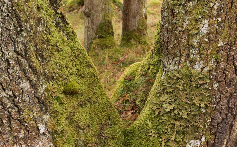 tinta w fotografii lasu