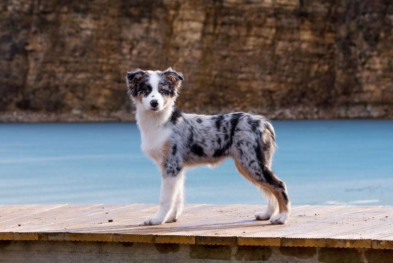 Zawodowy fotograf psów - sesja w plenerze