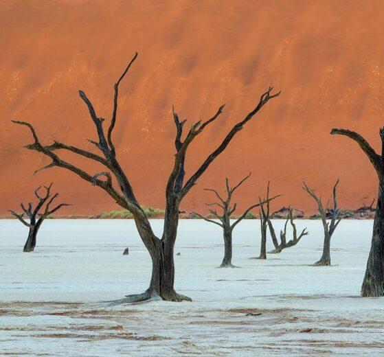SyncToy - automatyczna kopia bezpieczeństwa zdjęć, Namibia, martwe drzewa na pustyni, Deadvlei