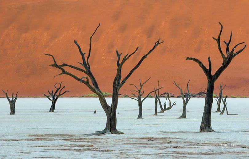 Deadvlei - martwy las w Namibii, Namibia fotograficzna kraina marzeń, poradnik fotograficzny